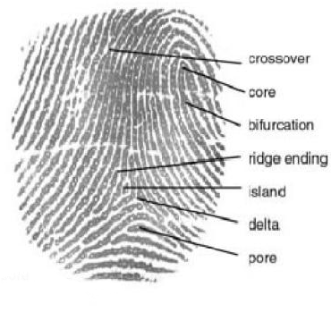 Working of Fingerprint Scanner Electronic Circuits and