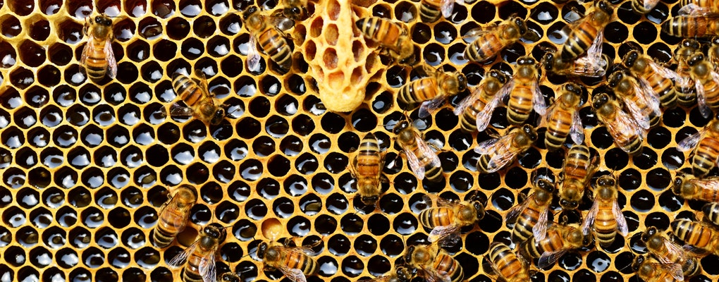 What is swarm intelligence